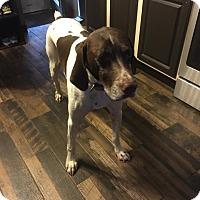 Adopt A Pet :: Yatz - Hillsboro, MO