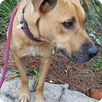 Adopt A Pet :: Sandy - Auburn, MA