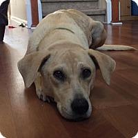Adopt A Pet :: Merry - Jacksonville, FL