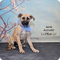 Adopt A Pet :: JANIE - Conroe, TX