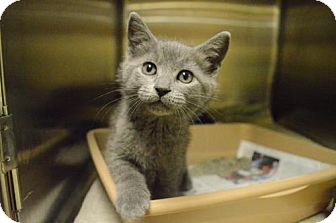 Domestic Mediumhair Kitten for adoption in DeLand, Florida - KITTENS - Assorted breed, color, size