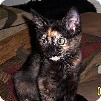 Adopt A Pet :: Juno - Chandler, AZ