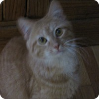 Adopt A Pet :: Clarice - Roseville, MN