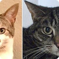 Adopt A Pet :: Benji and Riley - Colmar, PA