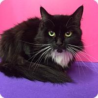 Adopt A Pet :: Emma - Pasadena, TX