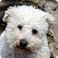 Adopt A Pet :: Susie - Bridgeton, MO