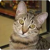 Adopt A Pet :: Dustin - Phoenix, AZ