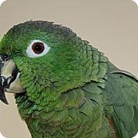 Adopt A Pet :: Quito - St. Louis, MO