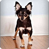 Adopt A Pet :: Tila - Owensboro, KY