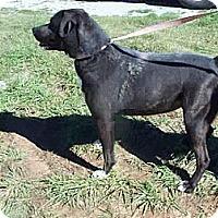 Adopt A Pet :: Bobbie - Albany, NY