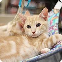 Adopt A Pet :: Edward - Sacramento, CA