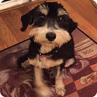 Adopt A Pet :: Marcie - Redondo Beach, CA