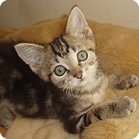 Adopt A Pet :: Bruiser - Germansville, PA