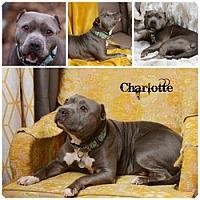 Adopt A Pet :: Charlotte - Sioux Falls, SD