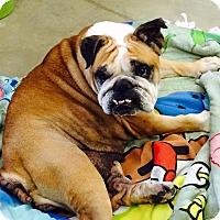 Adopt A Pet :: Fendi - Park Ridge, IL