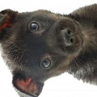 Adopt A Pet :: Hansel - Vacaville, CA