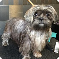 Adopt A Pet :: Maya - McKinney, TX