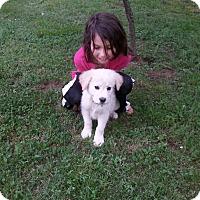 Adopt A Pet :: Sarah (ETAA) - Harrisonburg, VA