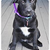 Adopt A Pet :: Pineland - Broomfield, CO