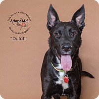 German Shepherd Dog/Dutch Shepherd Mix Dog for adoption in Cypress, Texas - Dutch