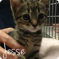 Adopt A Pet :: Jesse - Flushing, NY