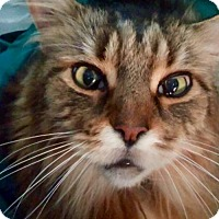 Adopt A Pet :: Harrington (Harry) - Absecon, NJ