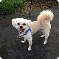 Adopt A Pet :: Lucky - Naples, FL