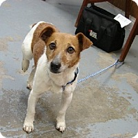 Adopt A Pet :: Pedro - Aurora, IL