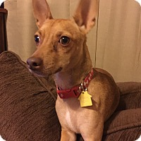 Adopt A Pet :: Dobby - McDonough, GA