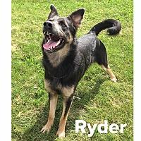 Adopt A Pet :: Ryder - Muscatine, IA