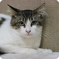 Adopt A Pet :: Lukas - Midland, MI