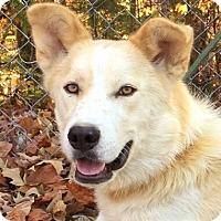 Adopt A Pet :: Monkey - Spring Valley, NY