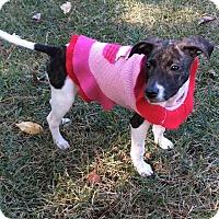 Adopt A Pet :: Mercy - Nyack, NY