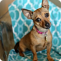 Adopt A Pet :: Lupe - Holliston, MA
