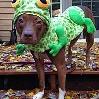 Adopt A Pet :: Lexi (courtesy listing) - Spotsylvania, VA