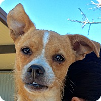 Terrier (Unknown Type, Small) Mix Puppy for adoption in Schertz, Texas - Lucky JH