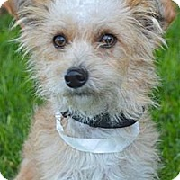 Adopt A Pet :: Casper - Los Angeles, CA