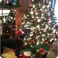 Adopt A Pet :: Darla - Racine, WI