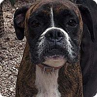 Adopt A Pet :: Bria ADOPTED!! - Antioch, IL