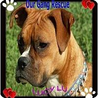 Adopt A Pet :: Lucy Lu - Cincinnati, OH