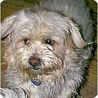Adopt A Pet :: Nina - dewey, AZ