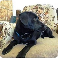 Adopt A Pet :: Brylee - YERINGTON, NV