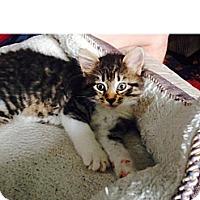 Adopt A Pet :: Elfie - Bedford, MA