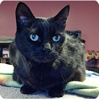 Adopt A Pet :: Joy and Cupid - Milford, MA