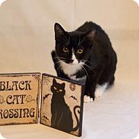 Adopt A Pet :: Cleo - San Antonio, TX