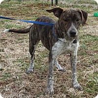 Adopt A Pet :: Athena - Franklin, KY