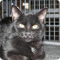 Adopt A Pet :: Anise - Hamilton, ON