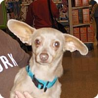 Adopt A Pet :: Ding - Fresno, CA