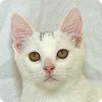 Adopt A Pet :: Trina V - Sacramento, CA