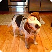 Adopt A Pet :: Champ - Wilmette, IL